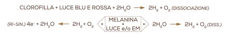 Formula Clorofilla