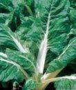 Semi di Bietola da Coste Verde a Costa Bianca
