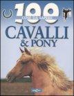 Cavalli & Pony