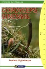 Cordyceps Sinensis Stefania Cazzavillan