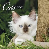 Calendario Cats Gatti - 2017 - Korsch Verlag