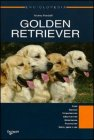 Golden Retriever - Andrea Pandolfi