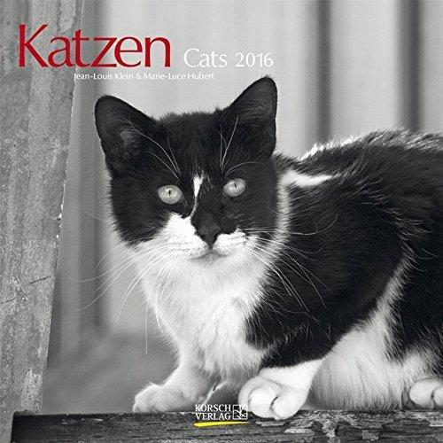 calendario katzen cats 2016 korsch verlag. Black Bedroom Furniture Sets. Home Design Ideas