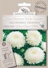 Semi di Callistephus Chinensis - China Aster Dwart Carpet White