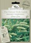 Semi di Phalaris Canariensis - Canary Grass