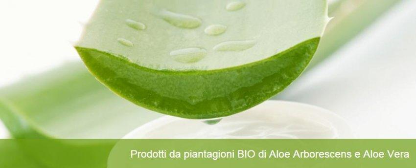 Estratto di Gemme e Aloe Arborescens