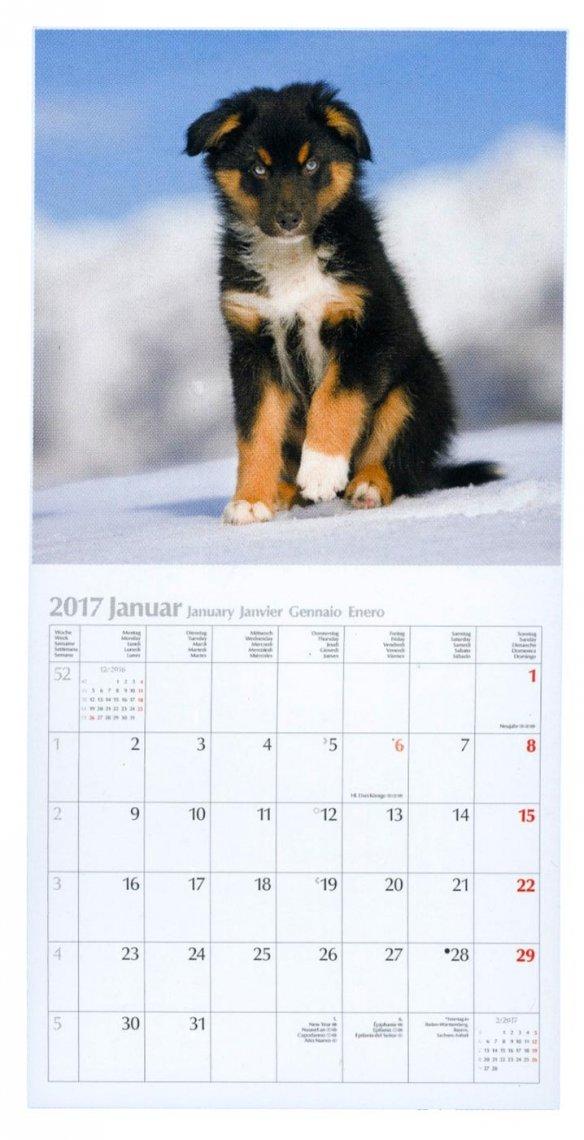Calendario Dogs 2017