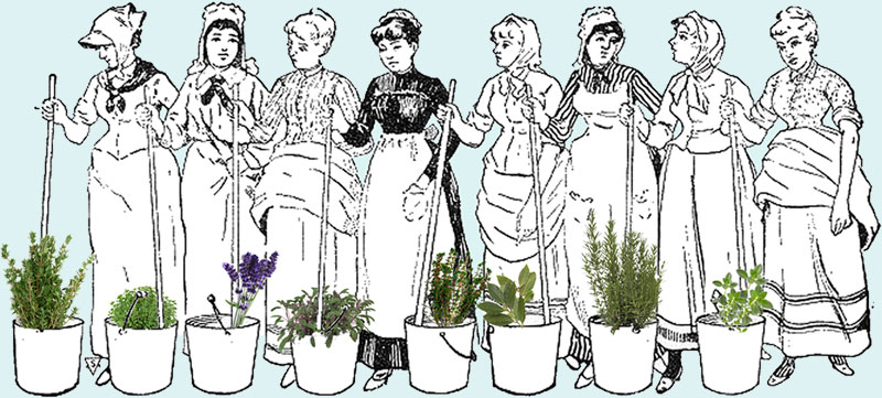 Grandmother Tips -  Pulire la Cucina Melissa e Salvia