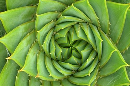 VerAloe - Succo Intero con Aloe Vera e Acai Bio
