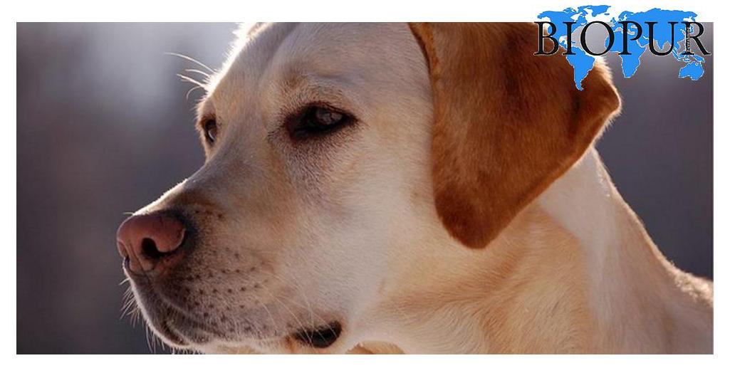 Cane e Gatti Vegetale - Riso e Carote