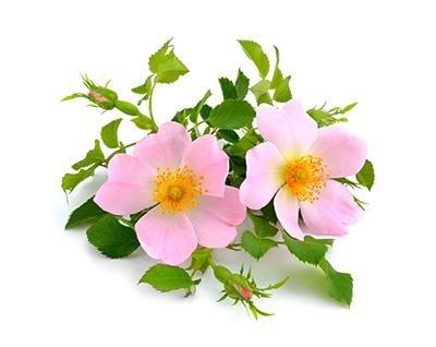 Concentrato Levigante 7 Giorni alla Rosa Mosqueta