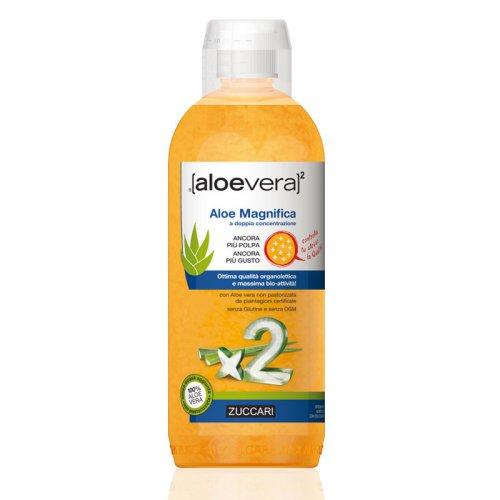 Aloe Magnifica - Aloevera2