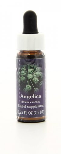 Angelica - Essenze Californiane