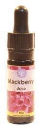 Blackberry Dose - Californiano