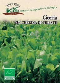 Semi di Cicoria Zuccherina di Trieste - 5 Gr