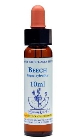 Beech - Fagus Sylvatica