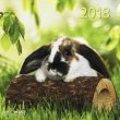 Calendario Rabbits 2018