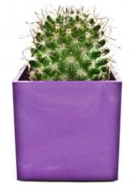 Cactus con Vasetto Magnetico Lilla