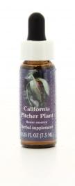 California Pitcher Plant - Essenze Californiane