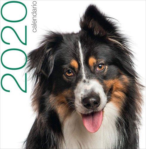 Cani - Calendario 2020