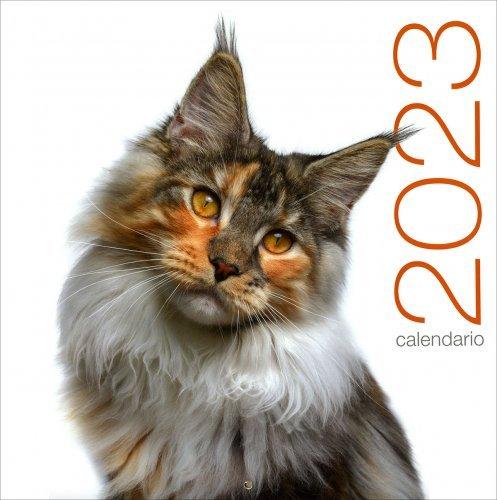 Gatti - Calendario 2020
