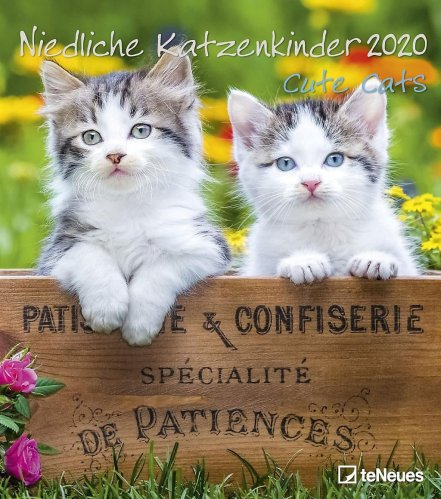 Calendario Cute Cats 2019