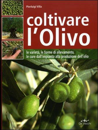 Coltivare l'Olivo