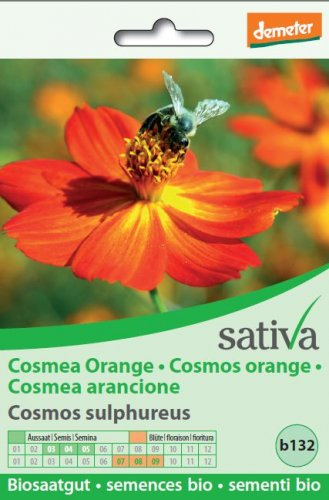Cosmea Arancione - b132