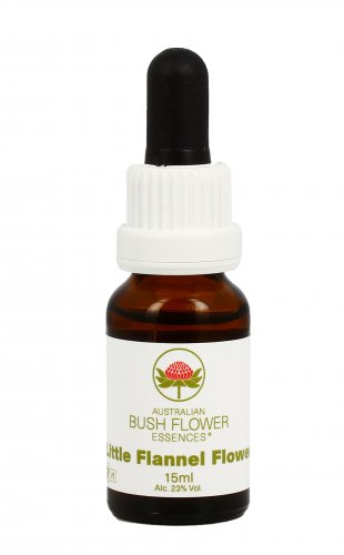 Little Flannel Flower - Essenze Australiane Bush