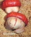 Semi di Zucca Turbante Turco - 25 Gr