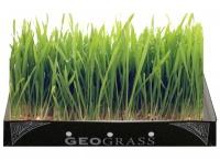 Geograss Kit per Erba di Grano - Farro