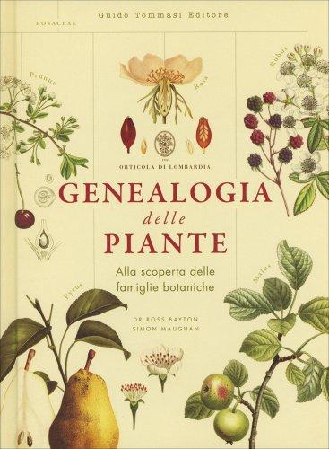 Genealogia delle Piante