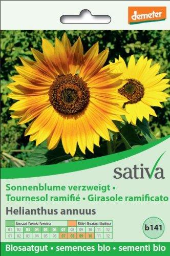 Girasole Ramificato - b141