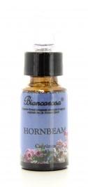 Hornbeam - Carpino