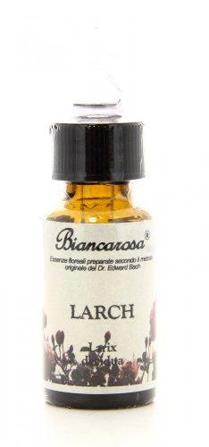 Larch - Larice