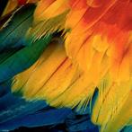 Puzzle Feathers - 1000 Pezzi