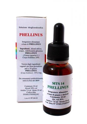 Phellinus Gocce - MTS14