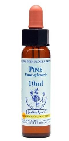 Pine - Pinus Sylvestris