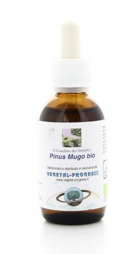 Pinus Mugo - Pino Mugo Bio - Estratto Idrogliceroalcolico