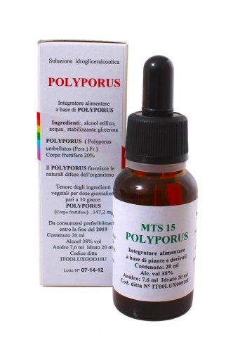 Polyporus Gocce - MTS15