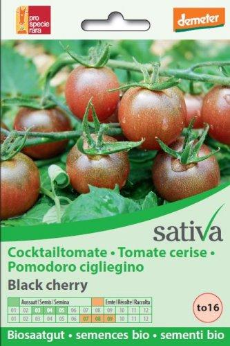 """Pomodoro Ciliegino """"Black Cherry"""" - to16"""