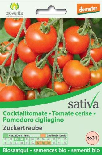 """Pomodoro Ciliegino """"Zuckertraube"""" - to31"""