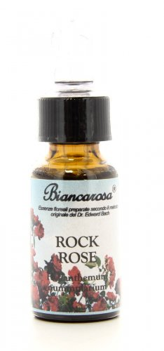 Rock Rose - Eliantemo