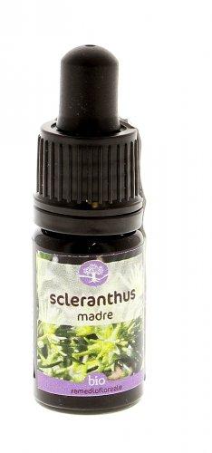 Scleranthus - Remedia