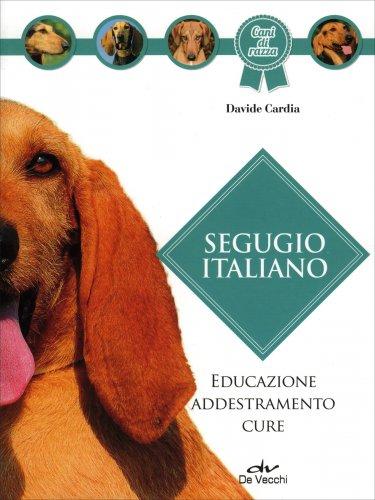 Segugio Italiano
