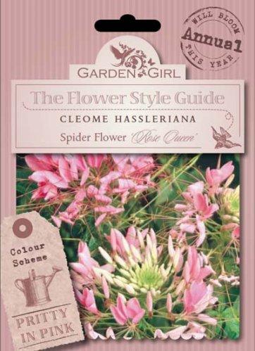 Semi di Cleome Hassleriana - Spider Flower Rose Queen