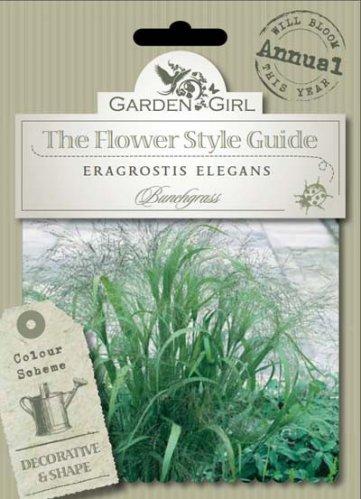 Semi di Eragrostis Elegans - Bunchgrass