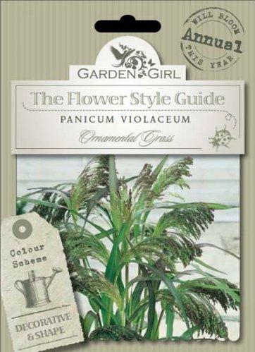 Semi di Panicum Violaceum - Ornamental Grass