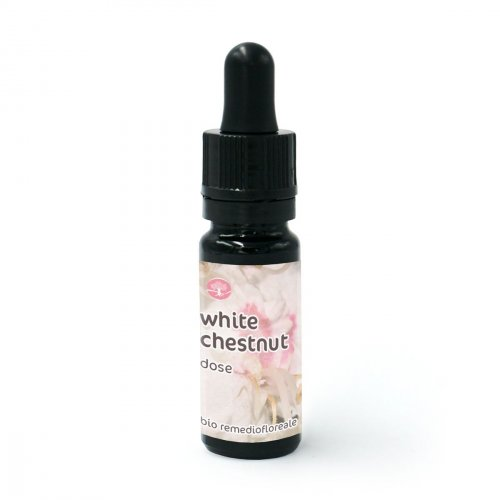 White Chestnut - Dose