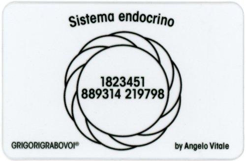 Tessera Radionica 45 - Sistema Endocrino